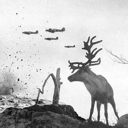 War Moose