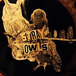 Stray Owls