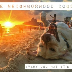 The Neighborhood Dogs