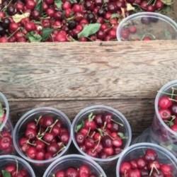 PLAY: Farmers' Market at Cerritos (LA) Fall